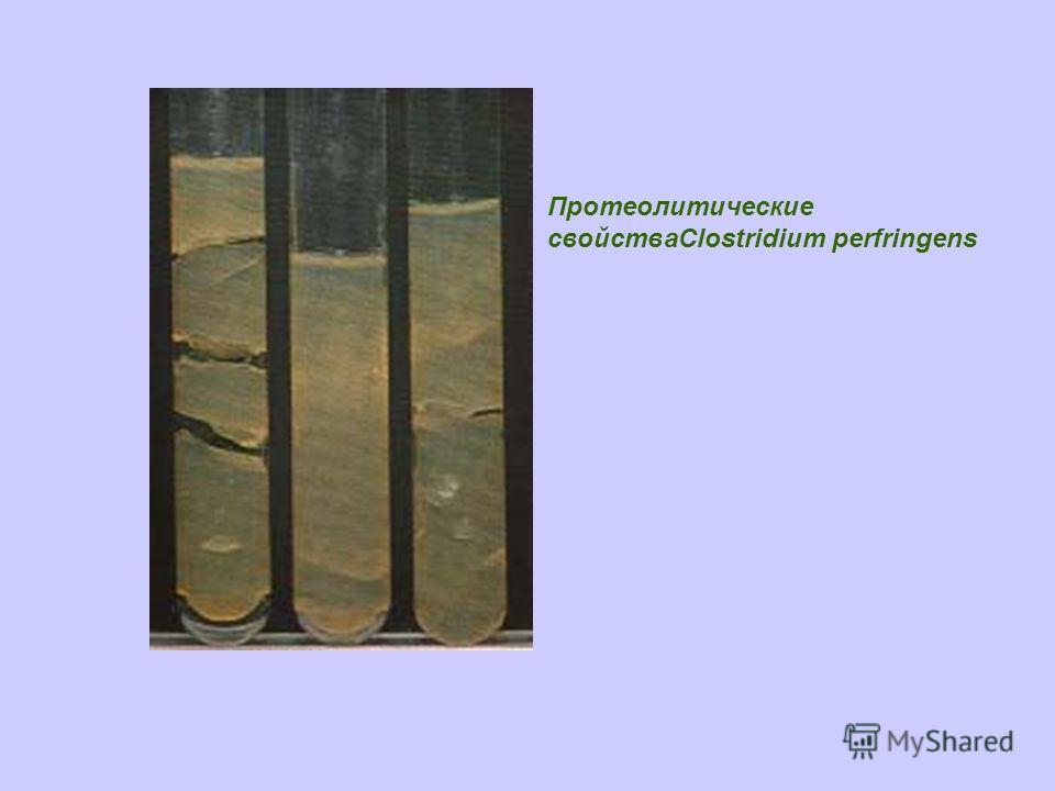 Протеолитические свойстваClostridium perfringens