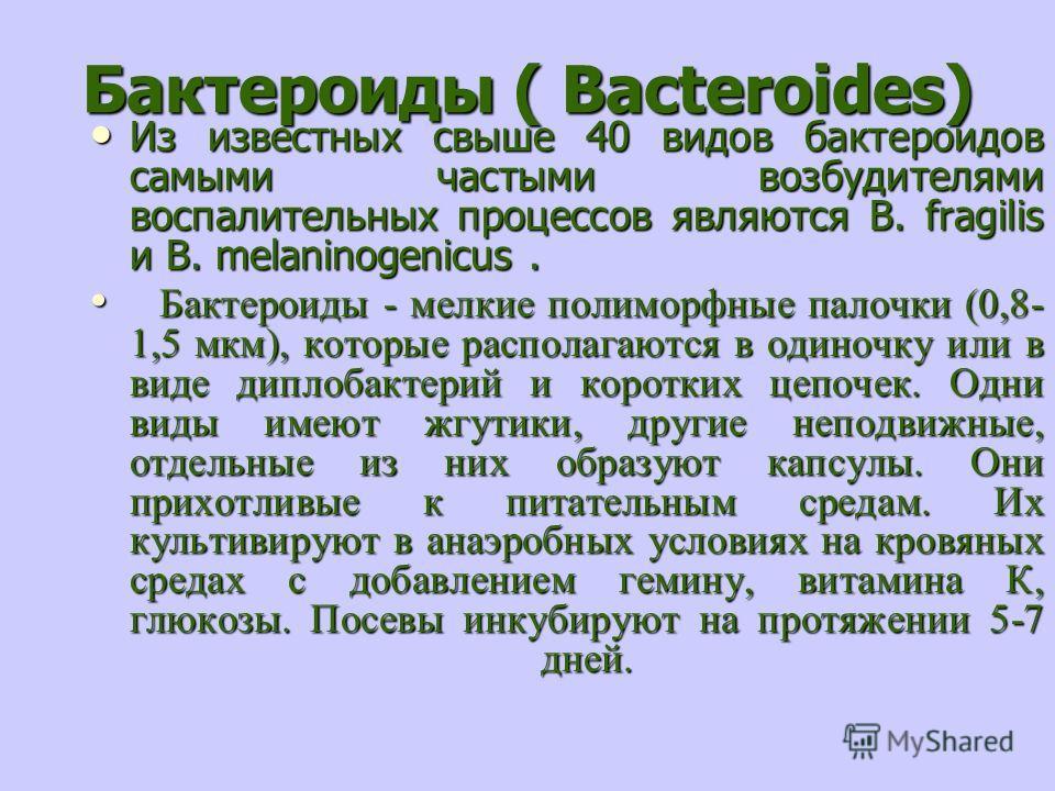 Бактероиды ( Bacteroides) Из известных свыше 40 видов бактероидов самыми частыми возбудителями воспалительных процессов являются B. fragilis и B. melaninogenicus. Из известных свыше 40 видов бактероидов самыми частыми возбудителями воспалительных про