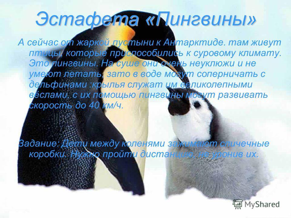 Эстафета «Пингвины» А сейчас от жаркой пустыни к Антарктиде. там живут птицы, которые приспособились к суровому климату. Это пингвины. На суше они очень неуклюжи и не умеют летать, зато в воде могут соперничать с дельфинами :крылья служат им великоле