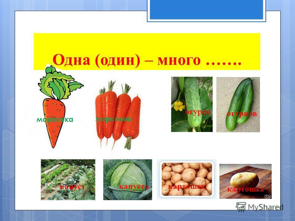 Одна (один) – много ……. морковка морковок огурец огурцов капуста капуст картошек картош ка