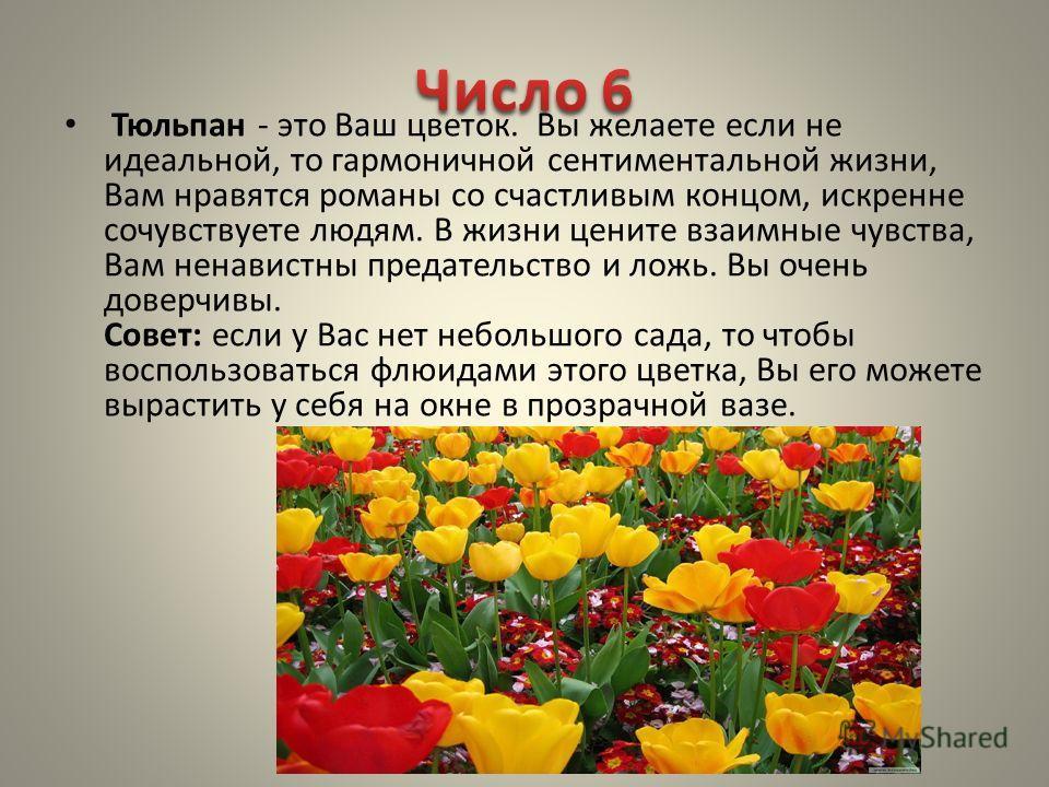 Тюльпан - это Ваш цветок. Вы желаете если не идеальной, то гармоничной сентиментальной жизни, Вам нравятся романы со счастливым концом, искренне сочувствуете людям. В жизни цените взаимные чувства, Вам ненавистны предательство и ложь. Вы очень доверч