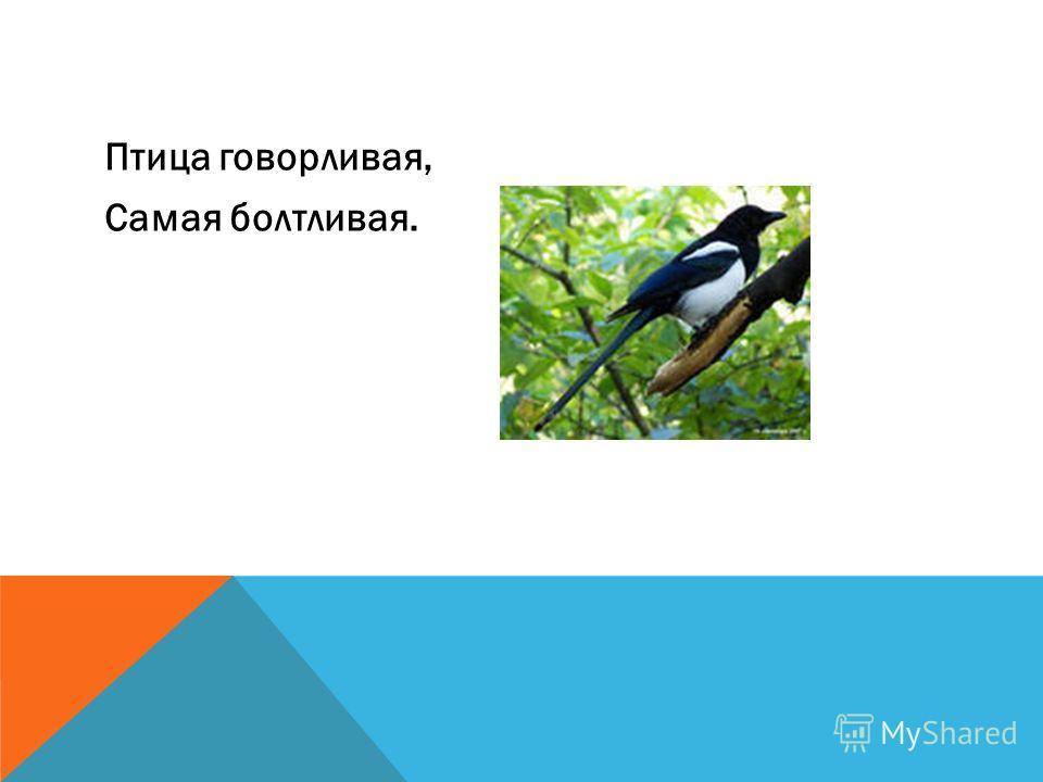 Птица говорливая, Самая болтливая.