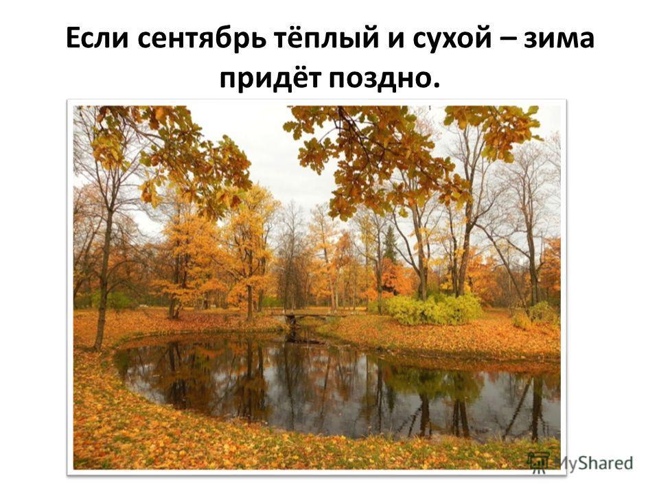 В лесу много рябины - осень будет дождливая, мало - сухая.