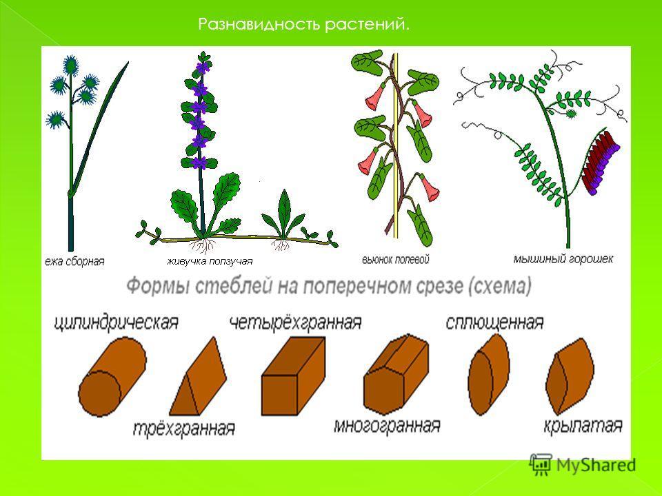 Разнавидность растений.