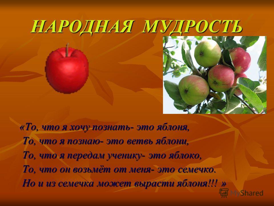 НАРОДНАЯ МУДРОСТЬ «То, что я хочу познать- это яблоня, То, что я познаю- это ветвь яблони, То, что я передам ученику- это яблоко, То, что он возьмёт от меня- это семечко. Но и из семечка может вырасти яблоня!!! »
