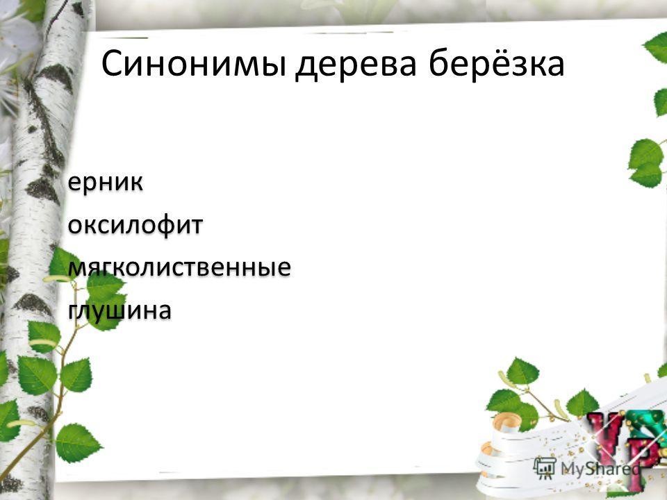 Синонимы дерева берёзка ерник оксилофит мягколиственные глушина ерник оксилофит мягколиственные глушина