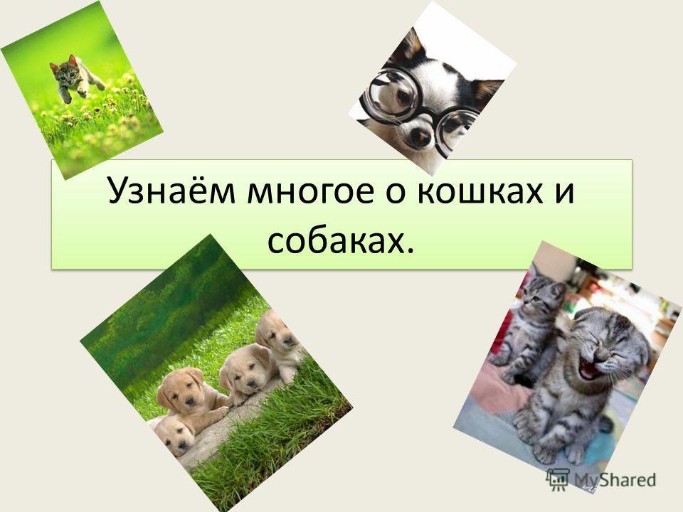 Узнаём многое о кошках и собаках.