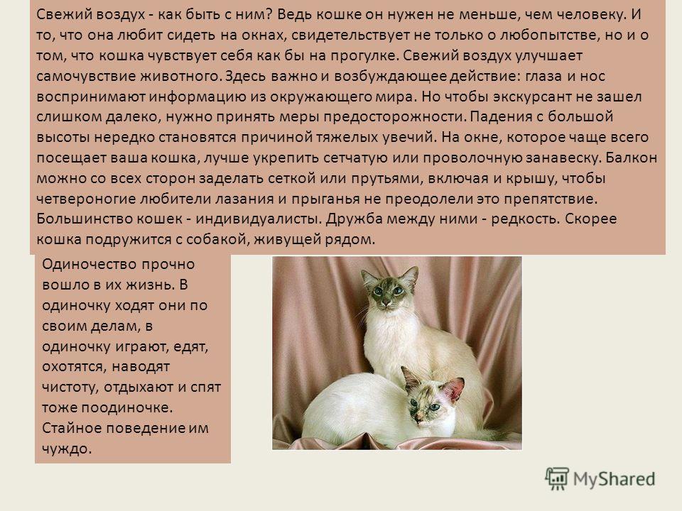 Свежий воздух - как быть с ним? Ведь кошке он нужен не меньше, чем человеку. И то, что она любит сидеть на окнах, свидетельствует не только о любопытстве, но и о том, что кошка чувствует себя как бы на прогулке. Свежий воздух улучшает самочувствие жи