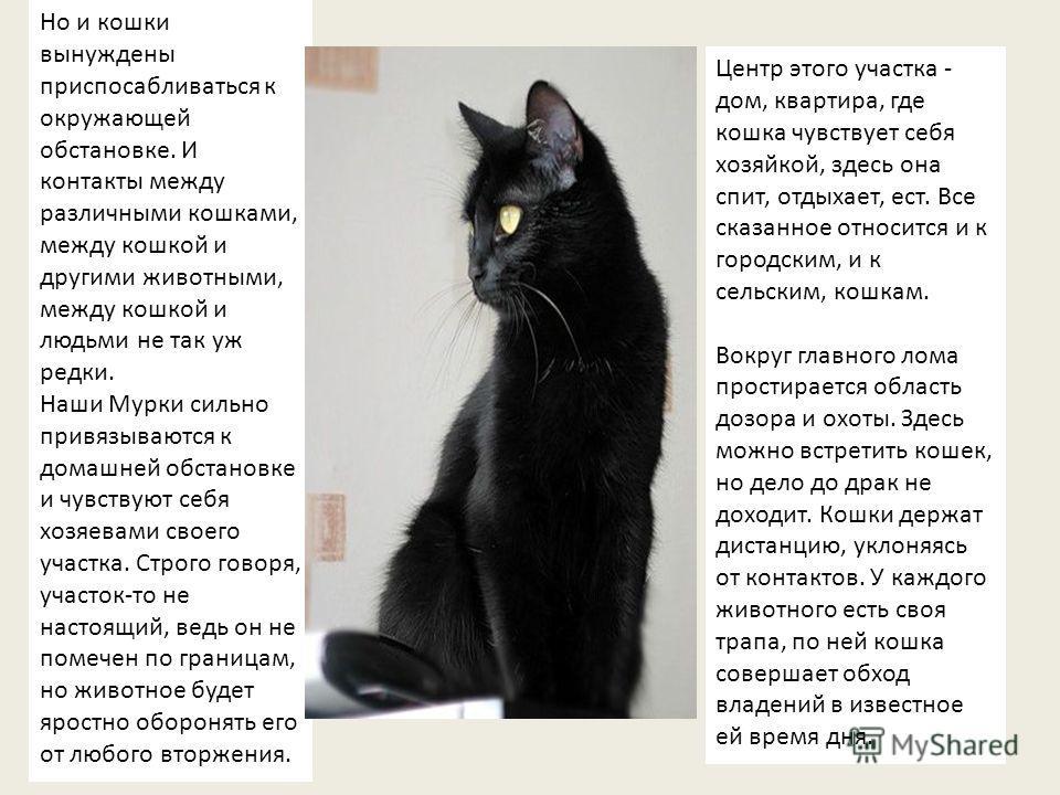 Но и кошки вынуждены приспосабливаться к окружающей обстановке. И контакты между различными кошками, между кошкой и другими животными, между кошкой и людьми не так уж редки. Наши Мурки сильно привязываются к домашней обстановке и чувствуют себя хозяе