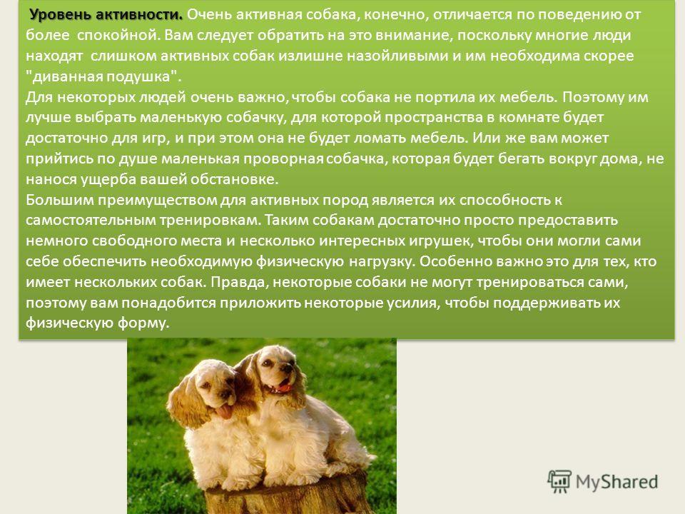 Уровень активности. Уровень активности. Очень активная собака, конечно, отличается по поведению от более спокойной. Вам следует обратить на это внимание, поскольку многие люди находят слишком активных собак излишне назойливыми и им необходима скорее
