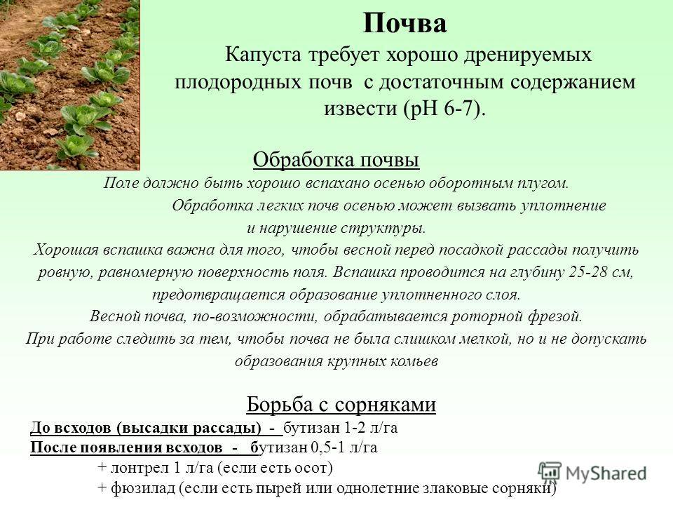 Почва Капуста требует хорошо дренируемых плодородных почв с достаточным содержанием извести (pH 6-7). Обработка почвы Поле должно быть хорошо вспахано осенью оборотным плугом. Обработка легких почв осенью может вызвать уплотнение и нарушение структур