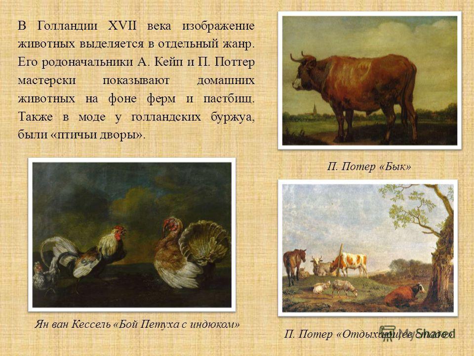 В Голландии XVII века изображение животных выделяется в отдельный жанр. Его родоначальники А. Кейп и П. Поттер мастерски показывают домашних животных на фоне ферм и пастбищ. Также в моде у голландских буржуа, были «птичьи дворы». П. Потер « Бык » П.