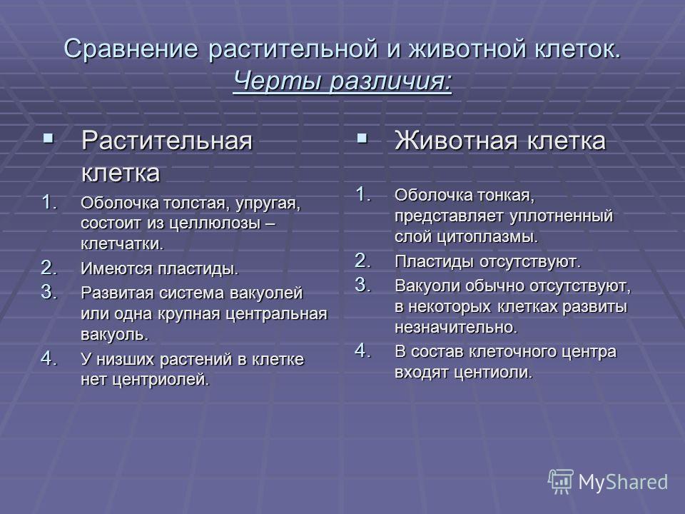 Сравнение растительной и животной клеток. Черты различия: Растительная клетка Растительная клетка 1. Оболочка толстая, упругая, состоит из целлюлозы – клетчатки. 2. Имеются пластиды. 3. Развитая система вакуолей или одна крупная центральная вакуоль.