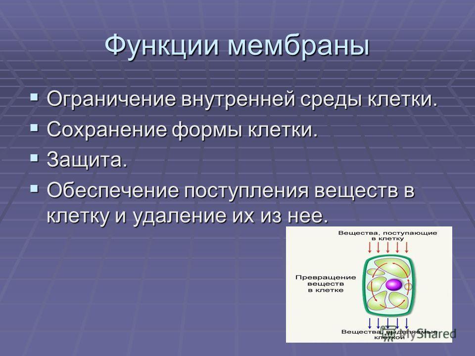 Функции мембраны Ограничение внутренней среды клетки. Ограничение внутренней среды клетки. Сохранение формы клетки. Сохранение формы клетки. Защита. Защита. Обеспечение поступления веществ в клетку и удаление их из нее. Обеспечение поступления вещест