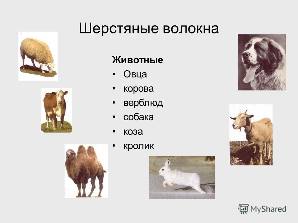 Шерстяные волокна Животные Овца корова верблюд собака коза кролик
