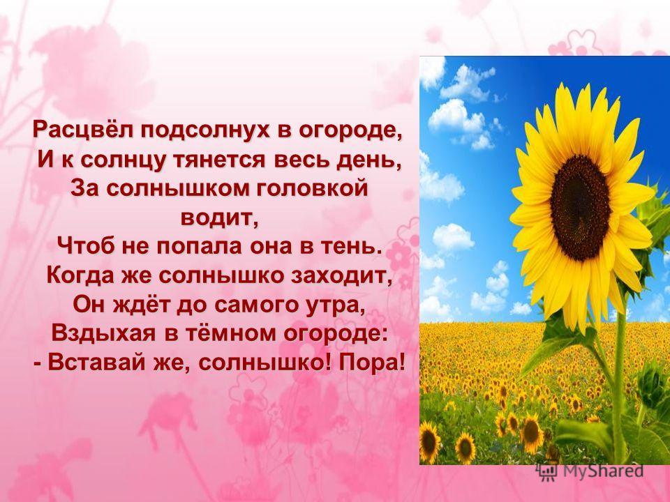 Расцвёл подсолнух в огороде, И к солнцу тянется весь день, За солнышком головкой водит, Чтоб не попала она в тень. Когда же солнышко заходит, Он ждёт до самого утра, Вздыхая в тёмном огороде: - Вставай же, солнышко! Пора!