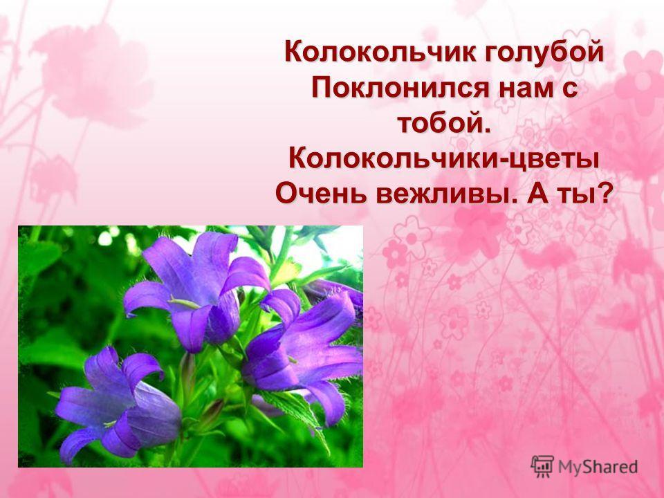 Колокольчик голубой Поклонился нам с тобой. Колокольчики-цветы Очень вежливы. А ты?
