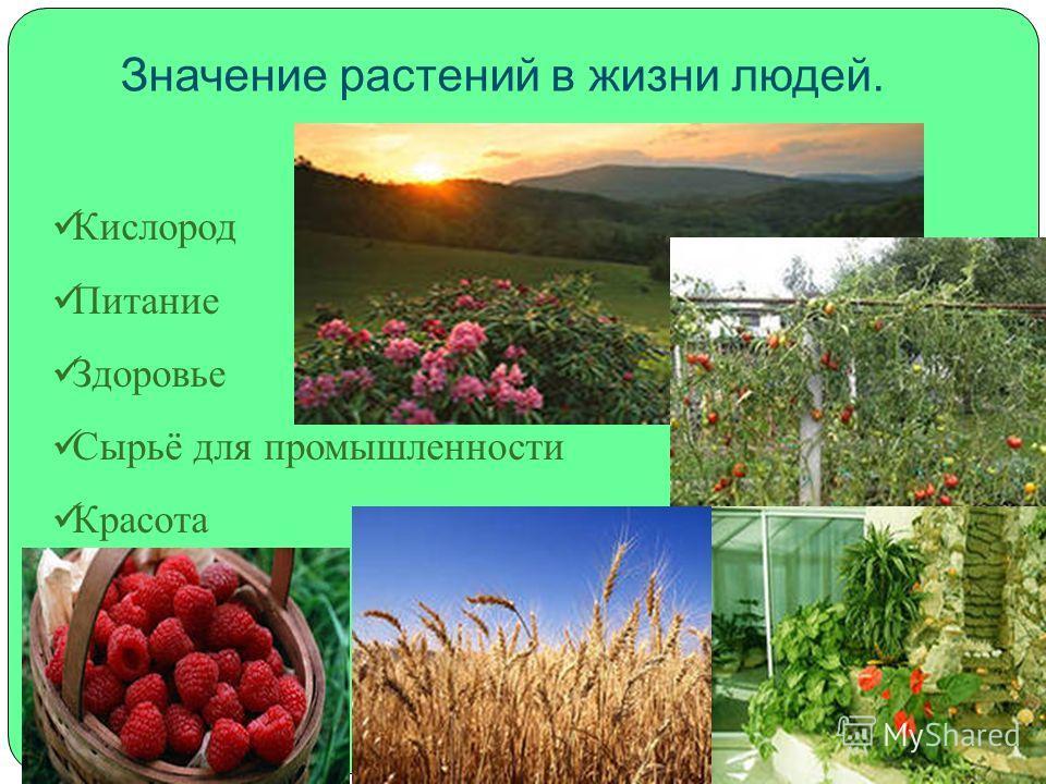 Значение растений в жизни людей. Кислород Питание Здоровье Сырьё для промышленности Красота