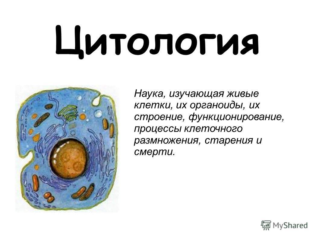 Цитология Наука, изучающая живые клетки, их органоиды, их строение, функционирование, процессы клеточного размножения, старения и смерти.