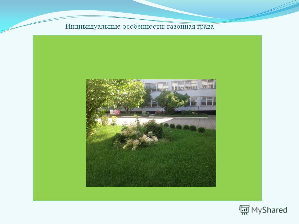 Индивидуальные особенности: газонная трава