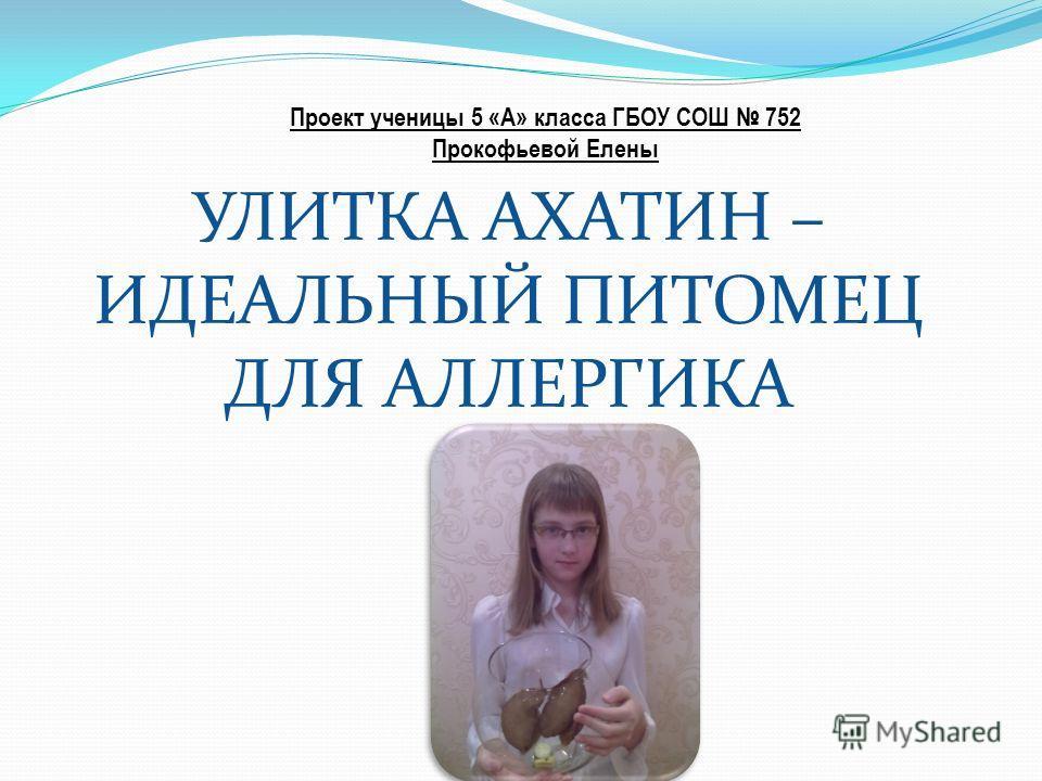 УЛИТКА АХАТИН – ИДЕАЛЬНЫЙ ПИТОМЕЦ ДЛЯ АЛЛЕРГИКА Проект ученицы 5 «А» класса ГБОУ СОШ 752 Прокофьевой Елены