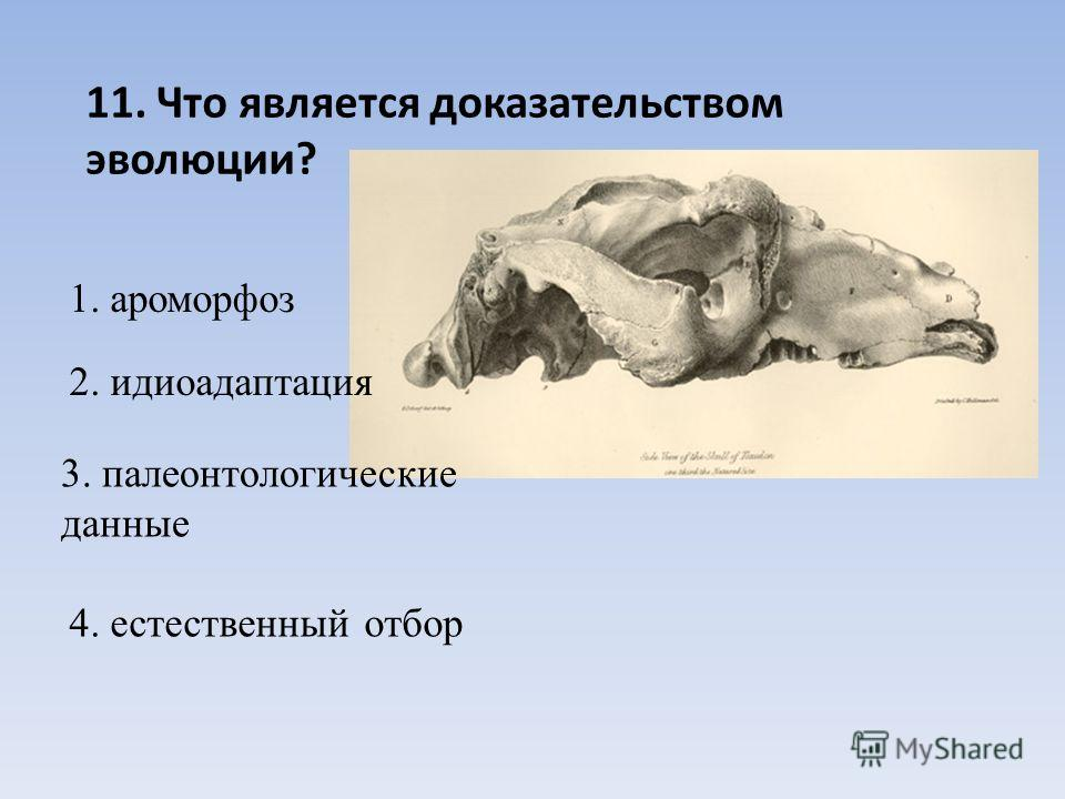 11. Что является доказательством эволюции? 1. ароморфоз 2. идиоадаптация 3. палеонтологические данные 4. естественный отбор