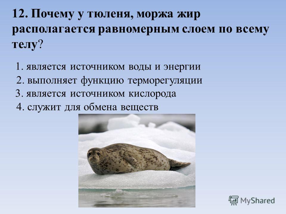 12. Почему у тюленя, моржа жир располагается равномерным слоем по всему телу? 1. является источником воды и энергии 2. выполняет функцию терморегуляции 3. является источником кислорода 4. служит для обмена веществ