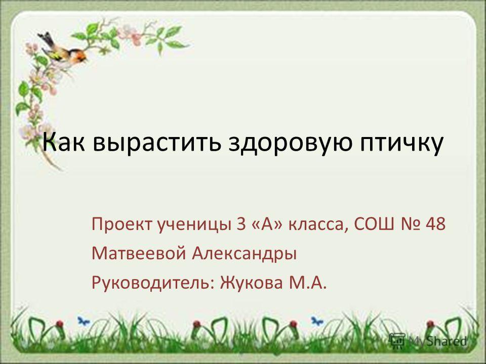 Как вырастить здоровую птичку Проект ученицы 3 «А» класса, СОШ 48 Матвеевой Александры Руководитель: Жукова М.А.