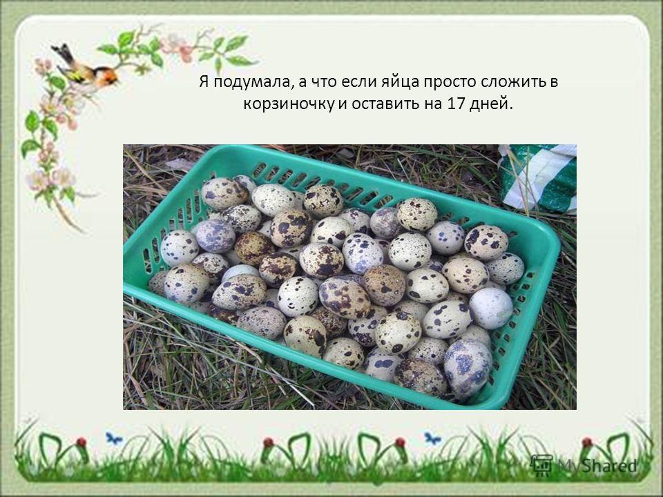 Я подумала, а что если яйца просто сложить в корзиночку и оставить на 17 дней.