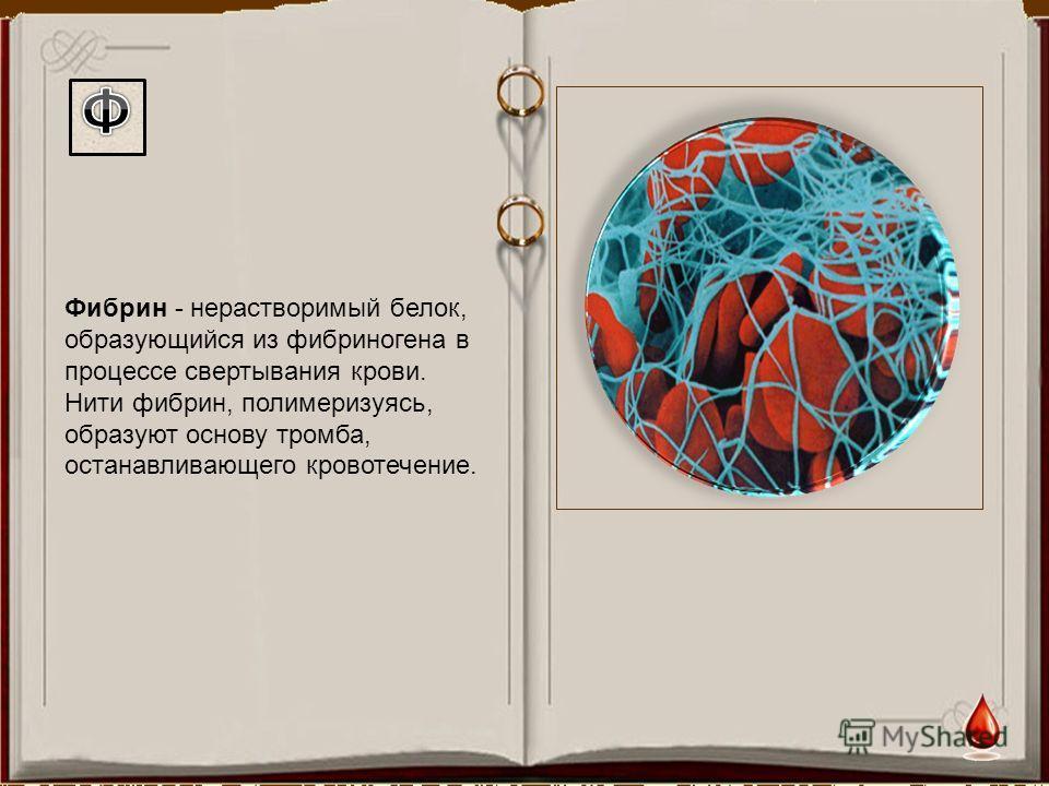 Фибрин - нерастворимый белок, образующийся из фибриногена в процессе свертывания крови. Нити фибрин, полимеризуясь, образуют основу тромба, останавливающего кровотечение.