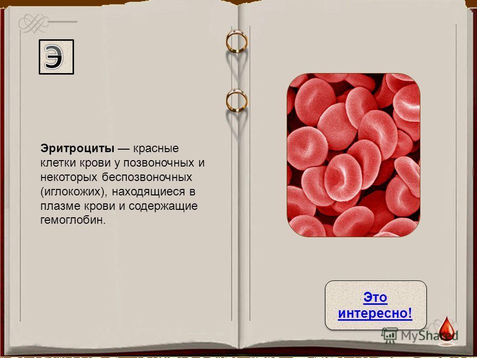 Эритроциты красные клетки крови у позвоночных и некоторых беспозвоночных (иглокожих), находящиеся в плазме крови и содержащие гемоглобин. Это интересно! Это интересно!