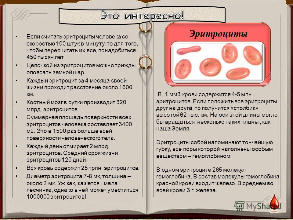 Если считать эритроциты человека со скоростью 100 штук в минуту, то для того, чтобы пересчитать их все, понадобиться 450 тысяч лет. Цепочкой из эритроцитов можно трижды опоясать земной шар. Каждый эритроцит за 4 месяца своей жизни проходит расстояние