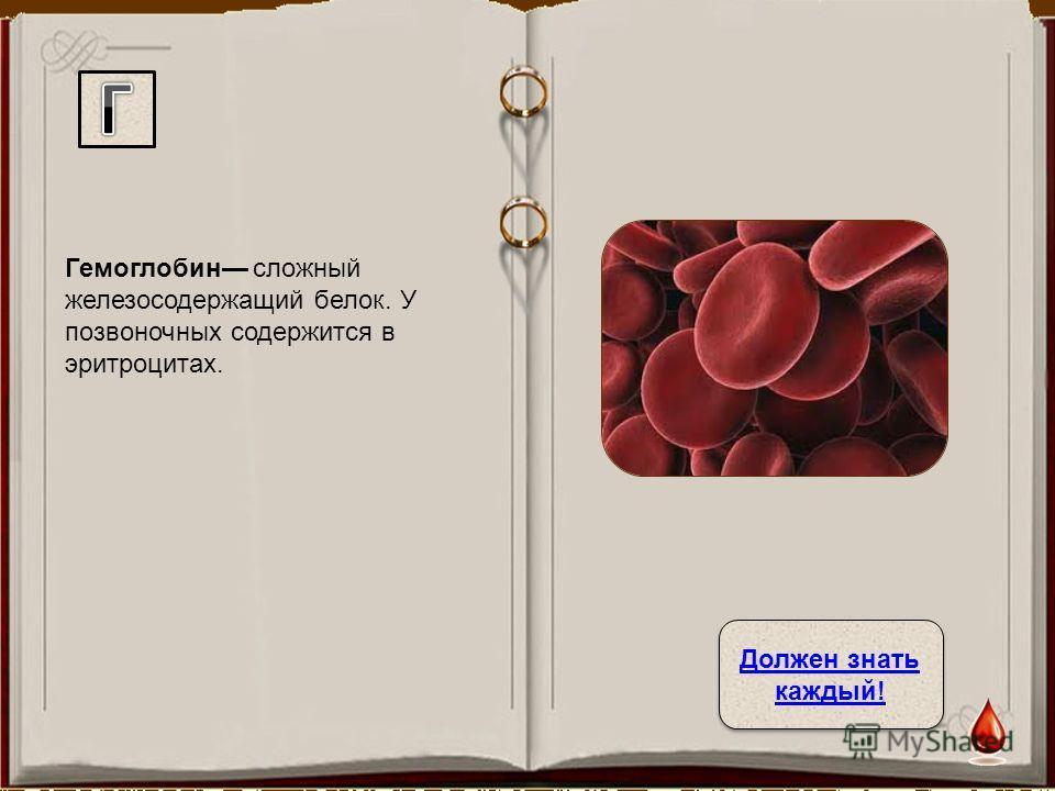Гемоглобин сложный железосодержащий белок. У позвоночных содержится в эритроцитах. Должен знать каждый! Должен знать каждый!
