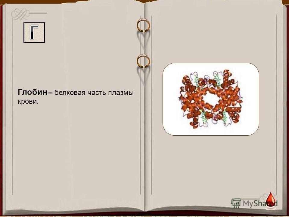 Глобин – белковая часть плазмы крови.