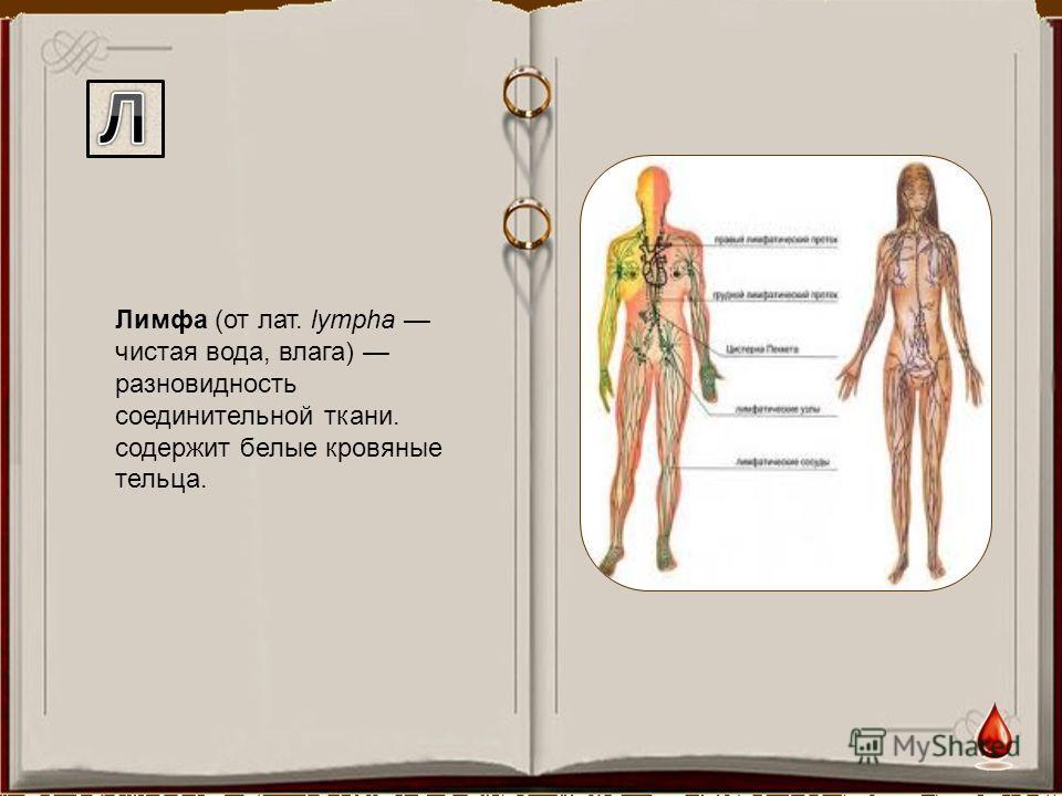 Лимфа (от лат. lympha чистая вода, влага) разновидность соединительной ткани. содержит белые кровяные тельца.
