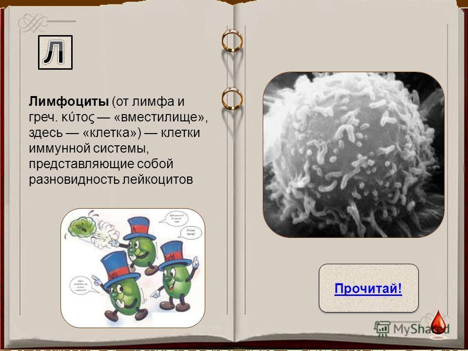 Лимфоциты (от лимфа и греч. κύτος «вместилище», здесь «клетка») клетки иммунной системы, представляющие собой разновидность лейкоцитов Прочитай!