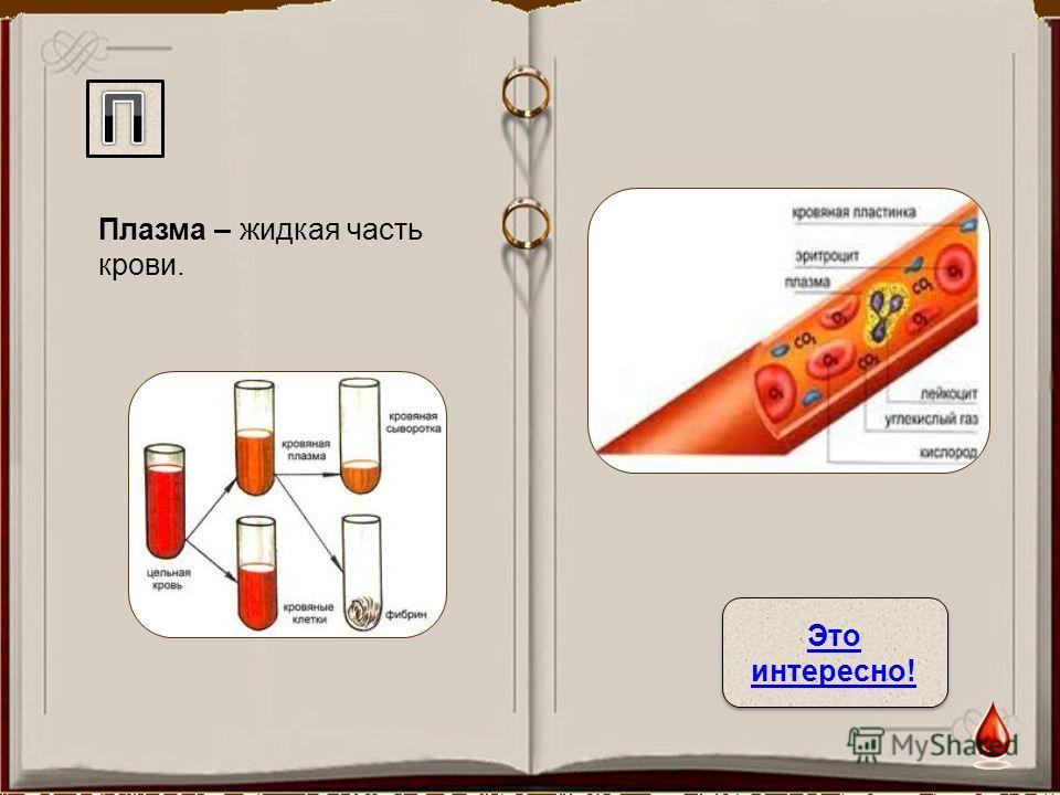 Плазма – жидкая часть крови. Это интересно! Это интересно!