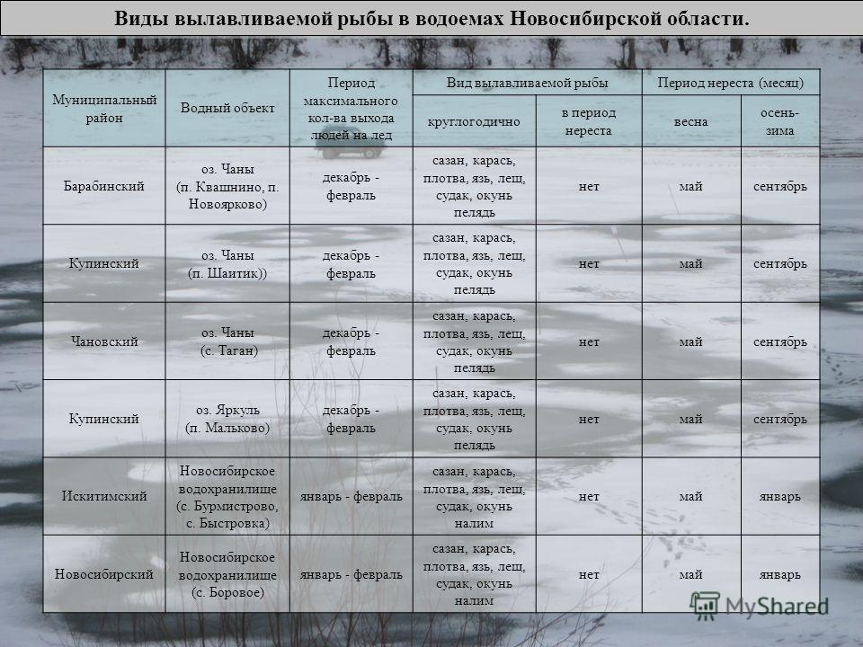 Виды вылавливаемой рыбы в водоемах Новосибирской области. Муниципальный район Водный объект Период максимального кол-ва выхода людей на лед Вид вылавливаемой рыбыПериод нереста (месяц) круглогодично в период нереста весна осень- зима Барабинский оз.