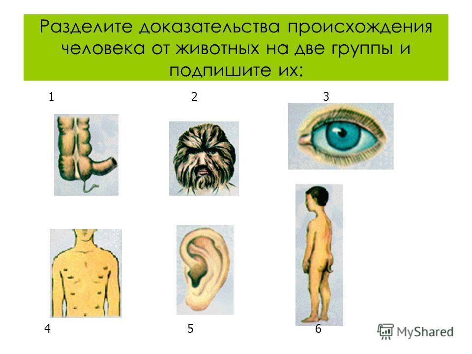 Разделите доказательства происхождения человека от животных на две группы и подпишите их: 1 2 3 4 5 6
