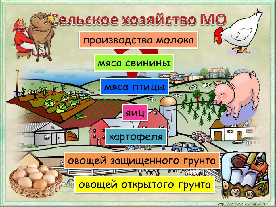 производства молока мяса свинины мяса птицы яиц картофеля овощей защищенного грунта овощей открытого грунта
