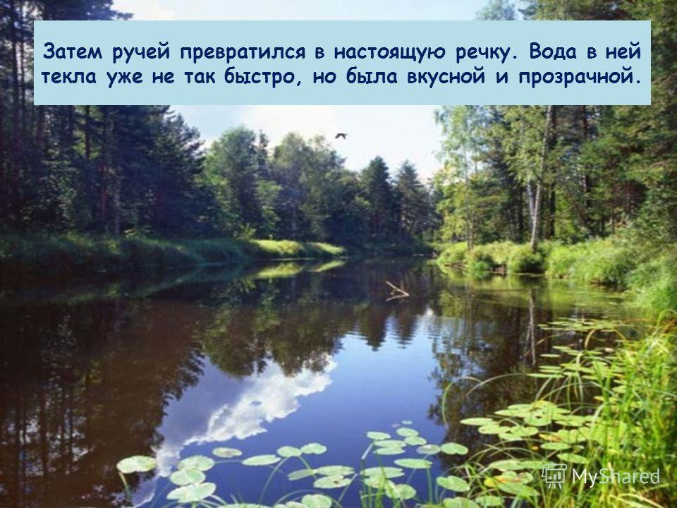 Затем ручей превратился в настоящую речку. Вода в ней текла уже не так быстро, но была вкусной и прозрачной.