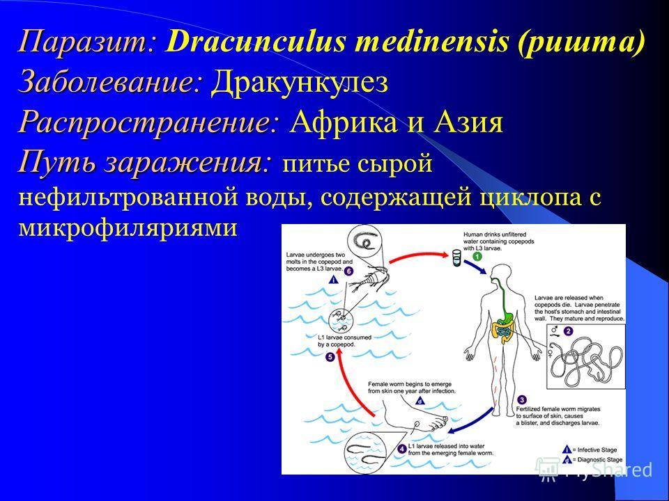 Паразит: Паразит: Dracunculus medinensis (ришта) Заболевание: Заболевание: Дракункулез Распространение: Распространение: Африка и Азия Путь заражения: Путь заражения: питье сырой нефильтрованной воды, содержащей циклопа с микрофиляриями