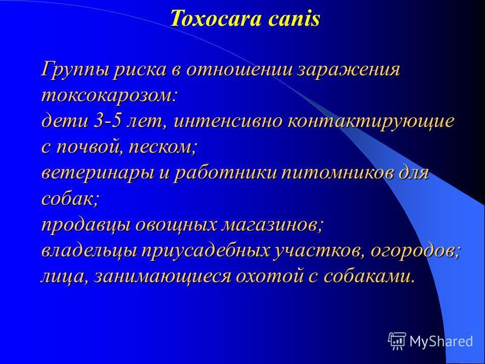 Toxocara canis Группы риска в отношении заражения токсокарозом: дети 3-5 лет, интенсивно контактирующие с почвой, песком; ветеринары и работники питомников для собак; продавцы овощных магазинов; владельцы приусадебных участков, огородов; лица, занима