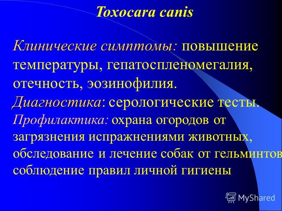 Toxocara canis Клинические симптомы: Клинические симптомы: повышение температуры, гепатоспленомегалия, отечность, эозинофилия. Диагностика: Диагностика: серологические тесты. Профилактика: охрана огородов от загрязнения испражнениями животных, обслед