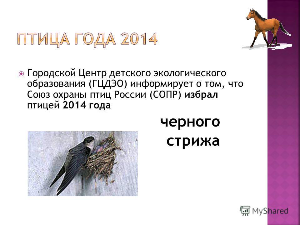 Городской Центр детского экологического образования (ГЦДЭО) информирует о том, что Союз охраны птиц России (СОПР) избрал птицей 2014 года черного стрижа