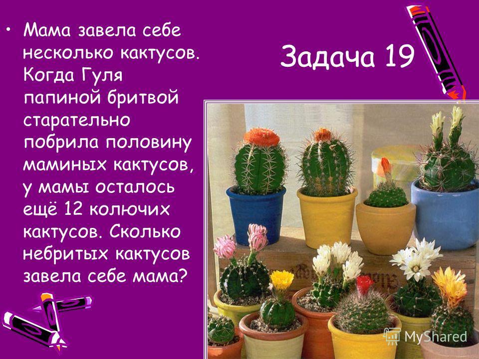 Задача 19 Мама завела себе несколько кактусов. Когда Гуля папиной бритвой старательно побрила половину маминых кактусов, у мамы осталось ещё 12 колючих кактусов. Сколько небритых кактусов завела себе мама?