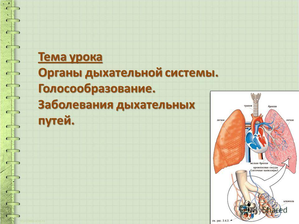 Тема урока Органы дыхательной системы. Голосообразование. Заболевания дыхательных путей.