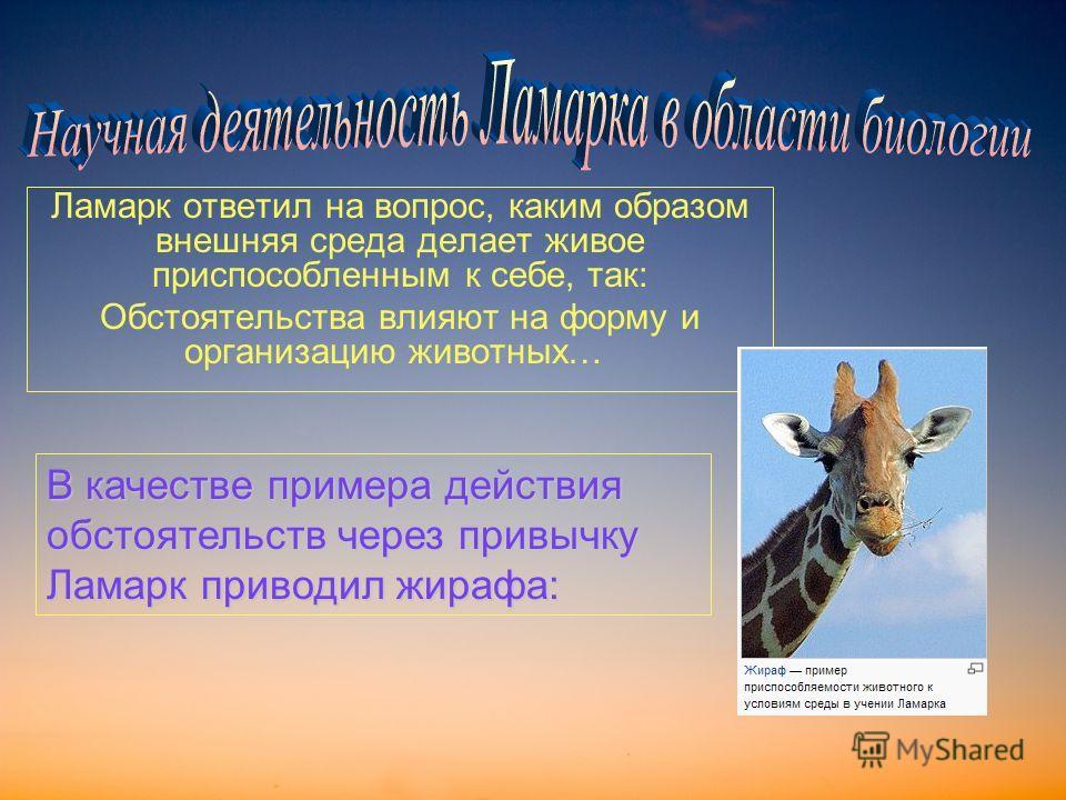 Ламарк ответил на вопрос, каким образом внешняя среда делает живое приспособленным к себе, так: Обстоятельства влияют на форму и организацию животных… В качестве примера действия обстоятельств через привычку Ламарк приводил жирафа: