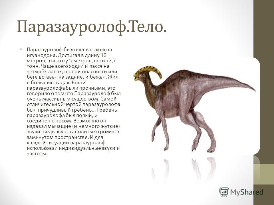 Паразауролоф.Тело. Паразауролоф был очень похож на игуанодона. Достигал в длину 10 метров, в высоту 5 метров, весил 2,7 тонн. Чаще всего ходил и пасся на четырёх лапах, но при опасности или беге вставал на задние, и бежал. Жил в больших стадах. Кости