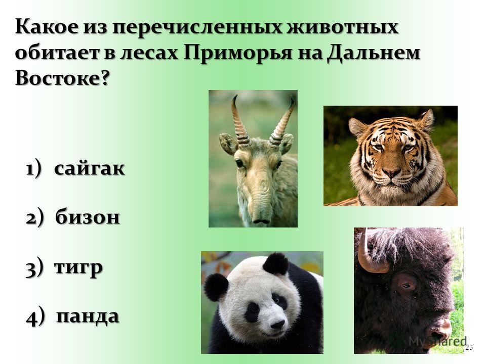 23 Какое из перечисленных животных обитает в лесах Приморья на Дальнем Востоке? 1) сайгак 2) бизон 3) тигр 4) панда